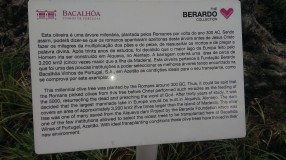 Quinta Bacalhoa